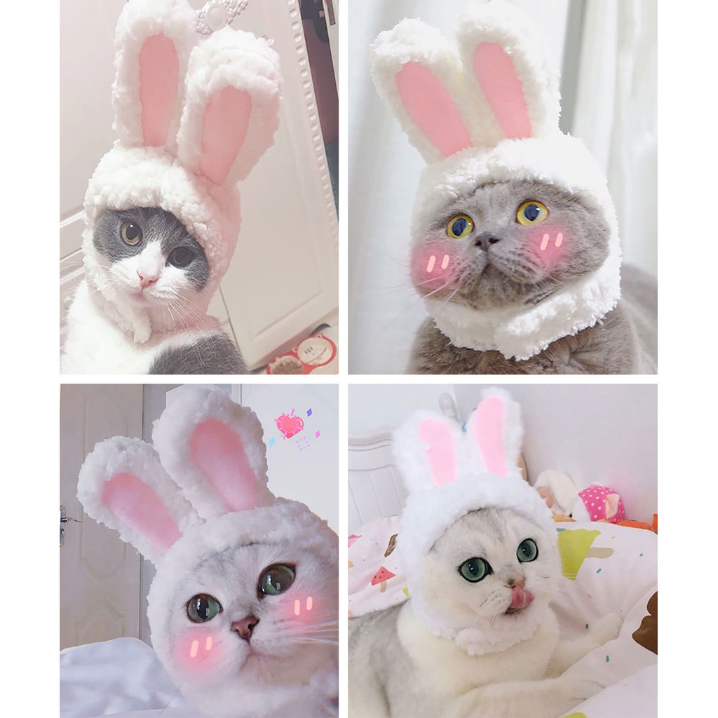 Cat Hat Fashion Bunny Ears Dog Cap Pet