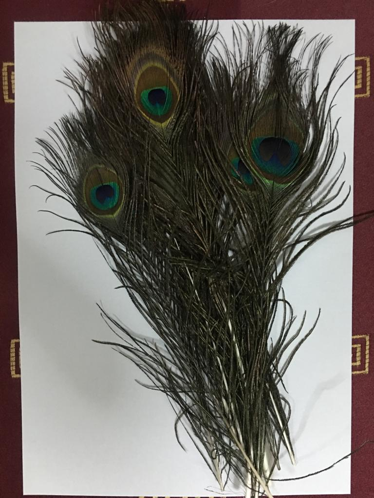Craft Masquerade Wedding Party Decor 10 Pack  25-30cm Peacock Feathers