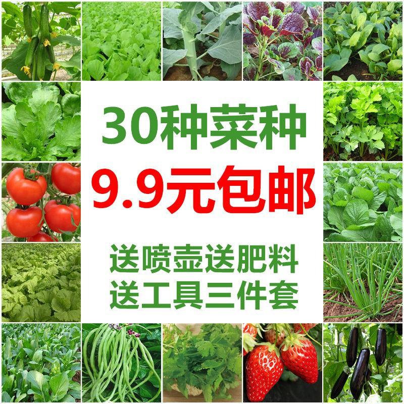 500Pcs Parsley Seeds Non-GMO Nutritious Vegetable Home Garden Farm Plants