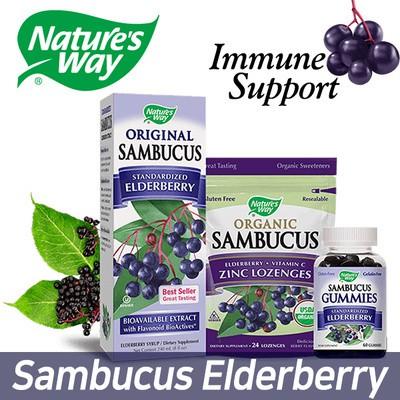 Natures Way SUGAR FREE SAMBUCUS Black Elderberry Syrup 240ml / Immune Support