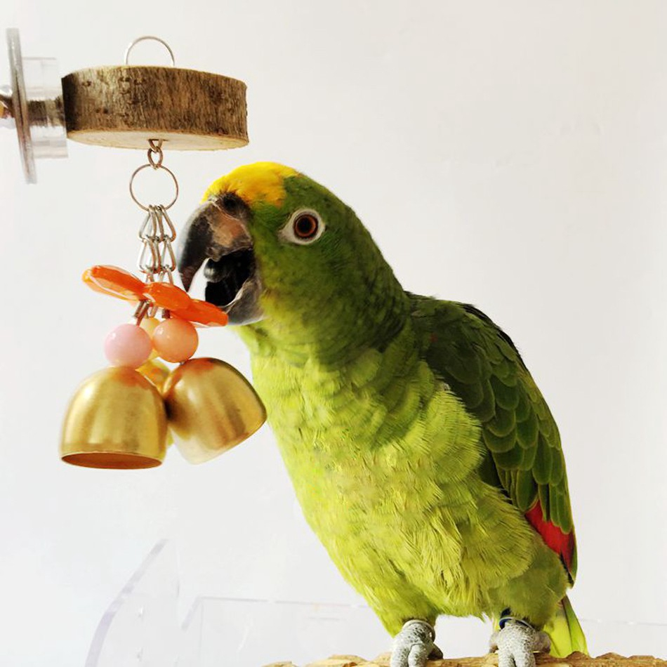 Sell Pet Toy Beautiful Fancy Beads Parrot Bird Bell Chain Chew Origamiorigami Macaw Parrotorigami Diagram Colorful Shopee Singapore