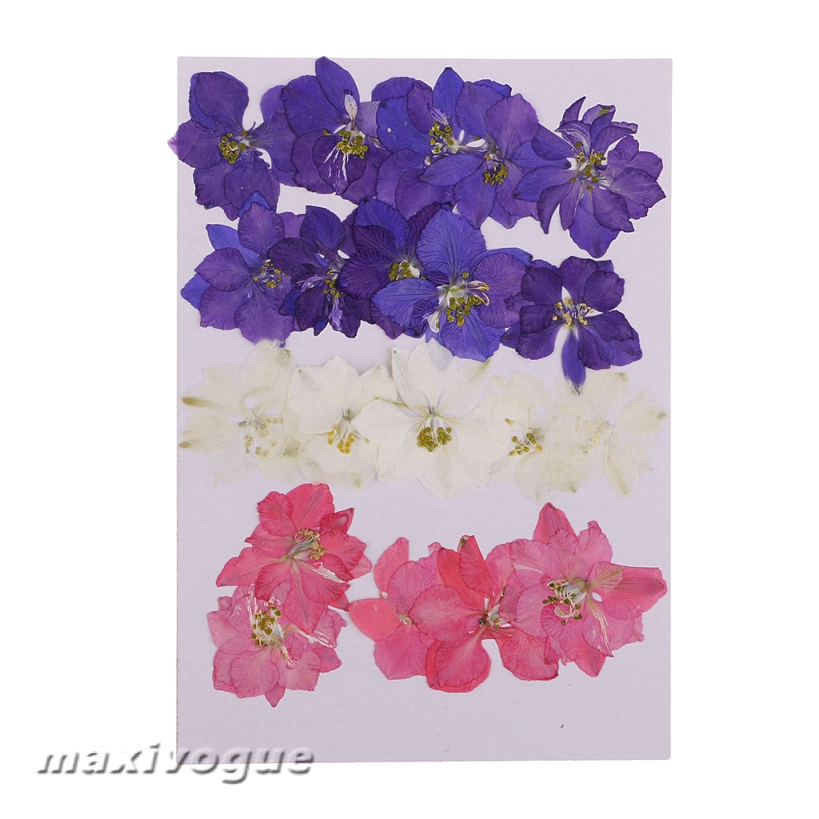 Pressed flowers off white delphinium 24pcs for floral art craft scrapbooking