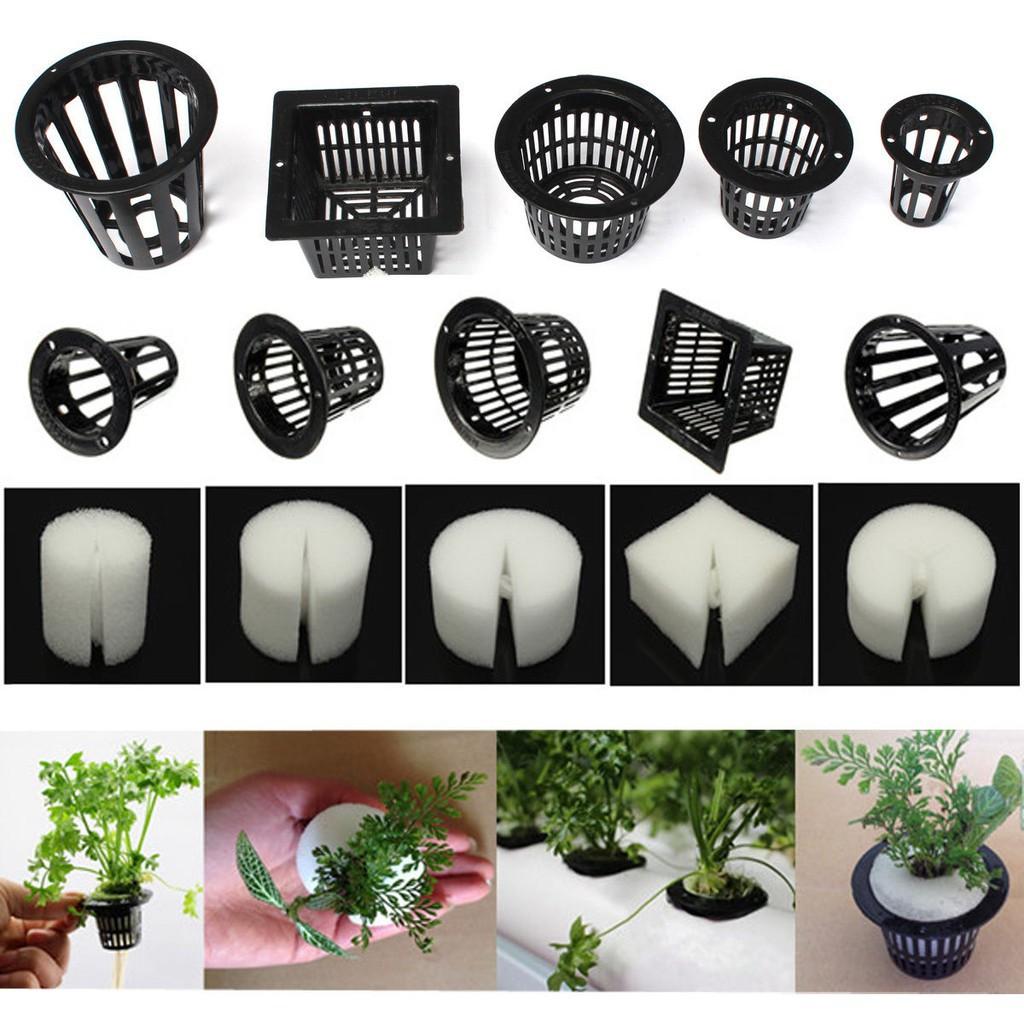 Clone Cloning Collar Foam Insert Hydroponic 10 Clear White Mesh Pot Net Basket